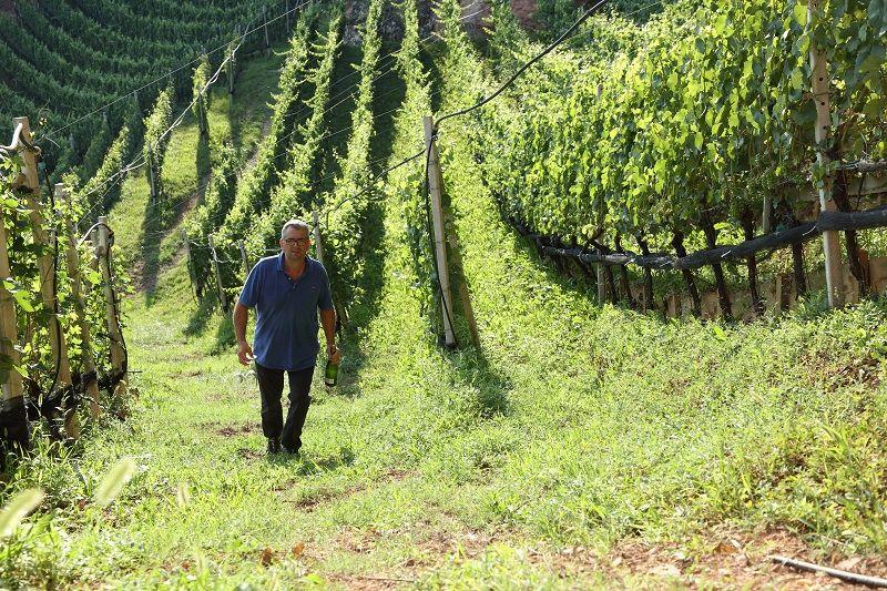 wine-trekking cantina lasterosse-1