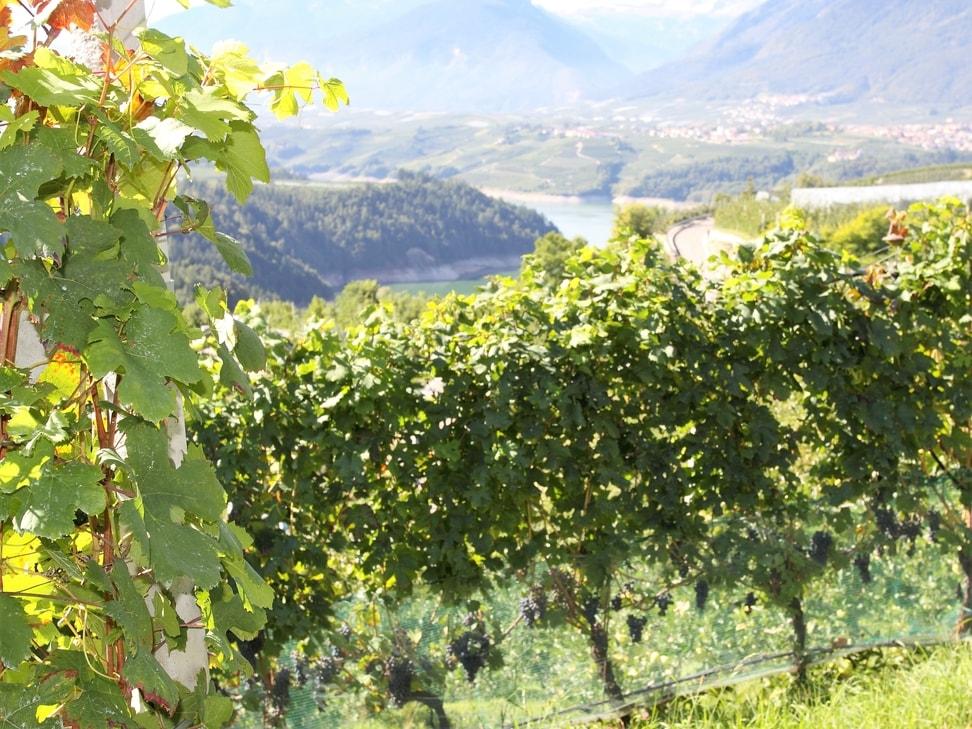 vino di montagna