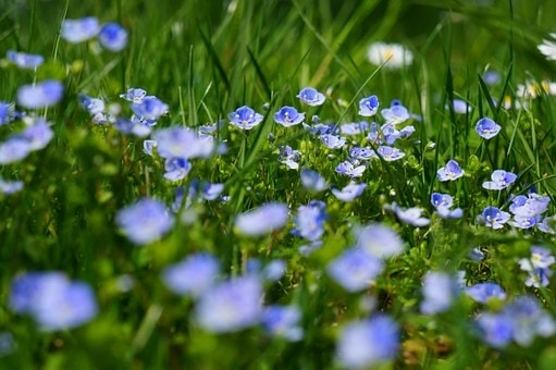 Primavera in vigna