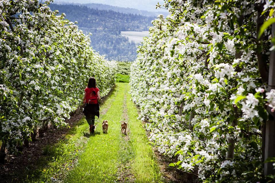 wine trekking lasterosse-passeggiata di primavera